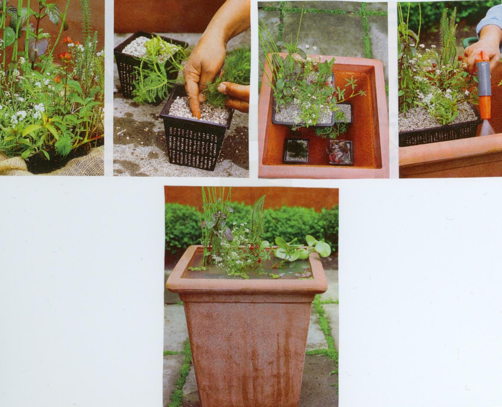 Belevenissen van een tuinkabouter siertuin kleine vijvers for Klein vijvertje aanleggen