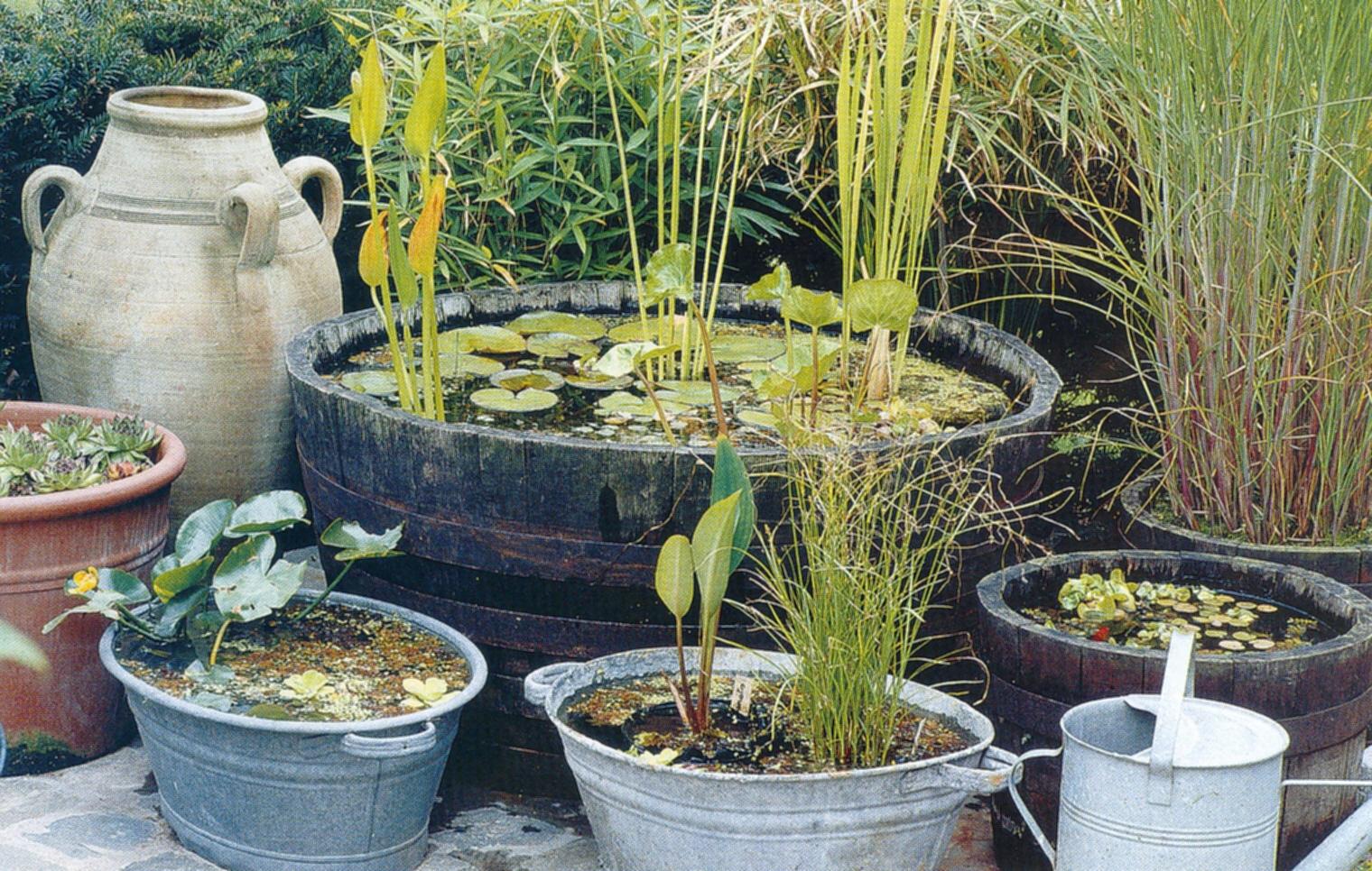 Belevenissen van een tuinkabouter siertuin kleine vijvers for Kleine tuinvijver