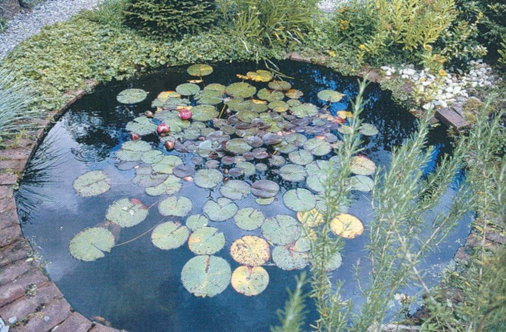 Belevenissen van een tuinkabouter siertuin kleine vijvers for Een vijver