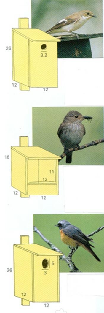 ophanghoogte minimaal 2 meter opmerking omdat de bonte vliegenvange